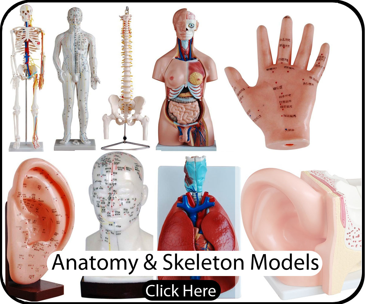 Anatomy Displayys